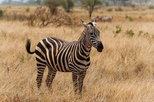 Animaux-44 - Wildlife - Marcs Photo