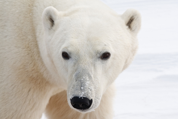 Animaux-50 - Wildlife - Marcs Photo