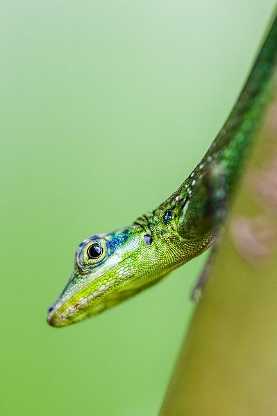 Animaux-26 - Wildlife - Marcs Photo