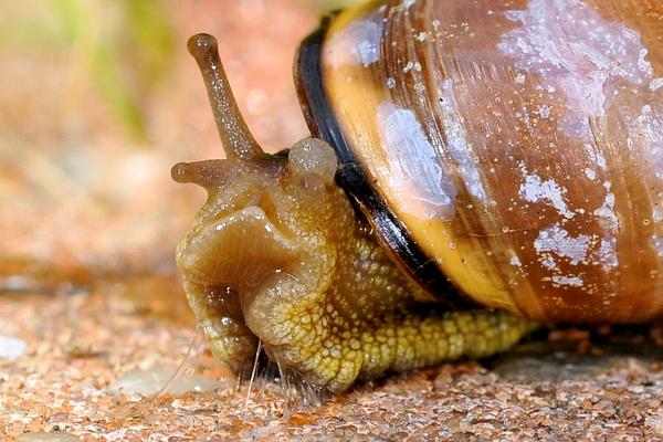 Snail by Hans De Groot