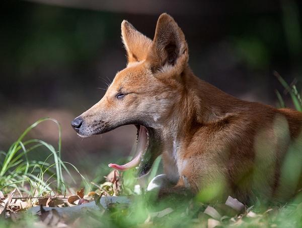 IMG_4765 - Wildlife - Brent Mail