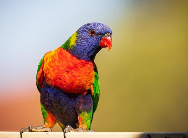 IMG_2336 - Wildlife - Brent Mail
