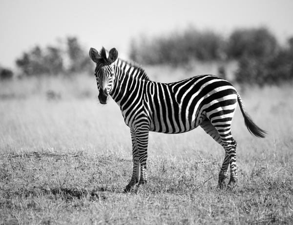 IMG_4731 - Wildlife - Brent Mail