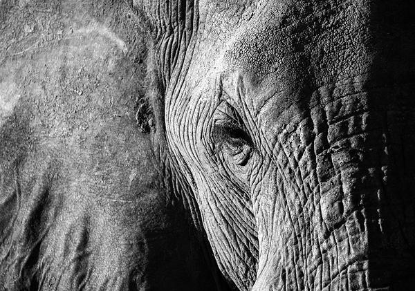 IMG_4945 - Wildlife - Brent Mail