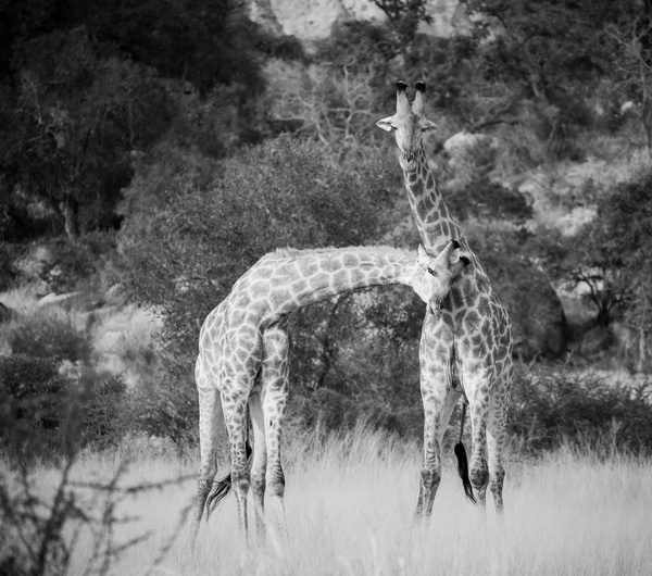 IMG_7928 - Wildlife - Brent Mail