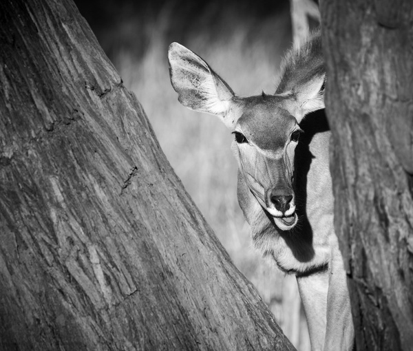 IMG_4932 - Wildlife - Brent Mail