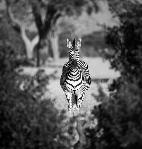 IMG_5112-2 - Wildlife - Brent Mail