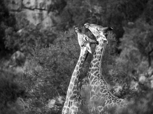 IMG_7918 - Wildlife - Brent Mail