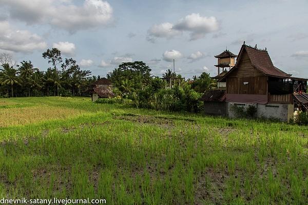 20131227_Bali_006 by Sergey Kokovenko