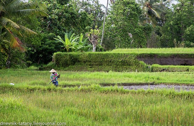 20131227_Bali_007