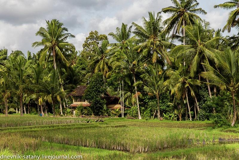 20131227_Bali_011