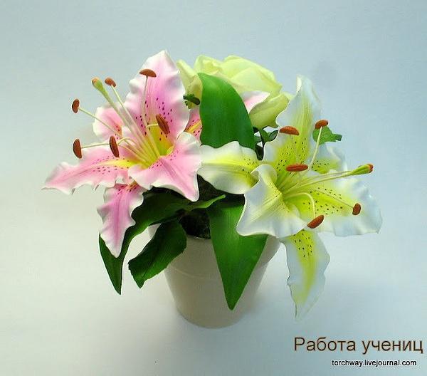 IMG_6174 by TatianaVorobyeva