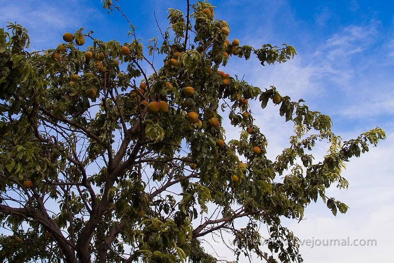 Erevan_10_2012-233