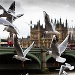 LONDON NOV 2012