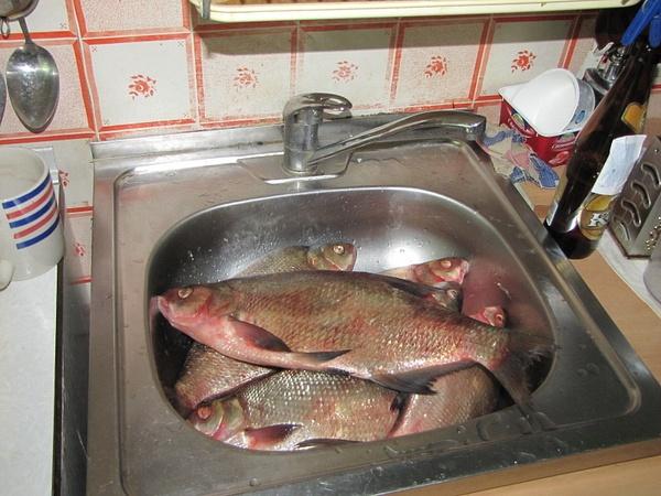 20120729_Fish_01 by CTapbIu