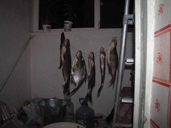 20120731_Fish_01 by CTapbIu