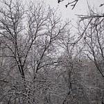 Snow 12.12.2012