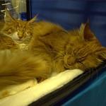 Выставка котов [2012-04-21]