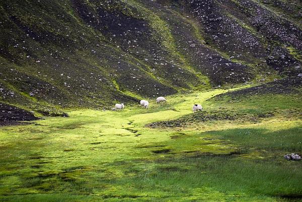 Southern Icelandic 2014 by Muzzyenn