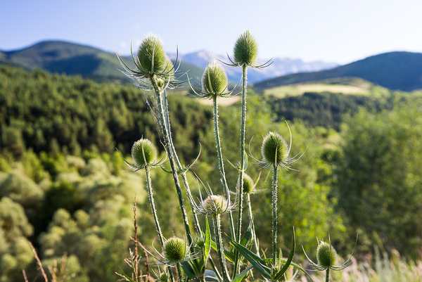Pyrenees mountains 2014 by Muzzyenn