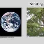 Shrinking Bird Populations