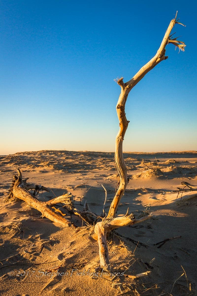 Driftwood by StephenFieldingImages