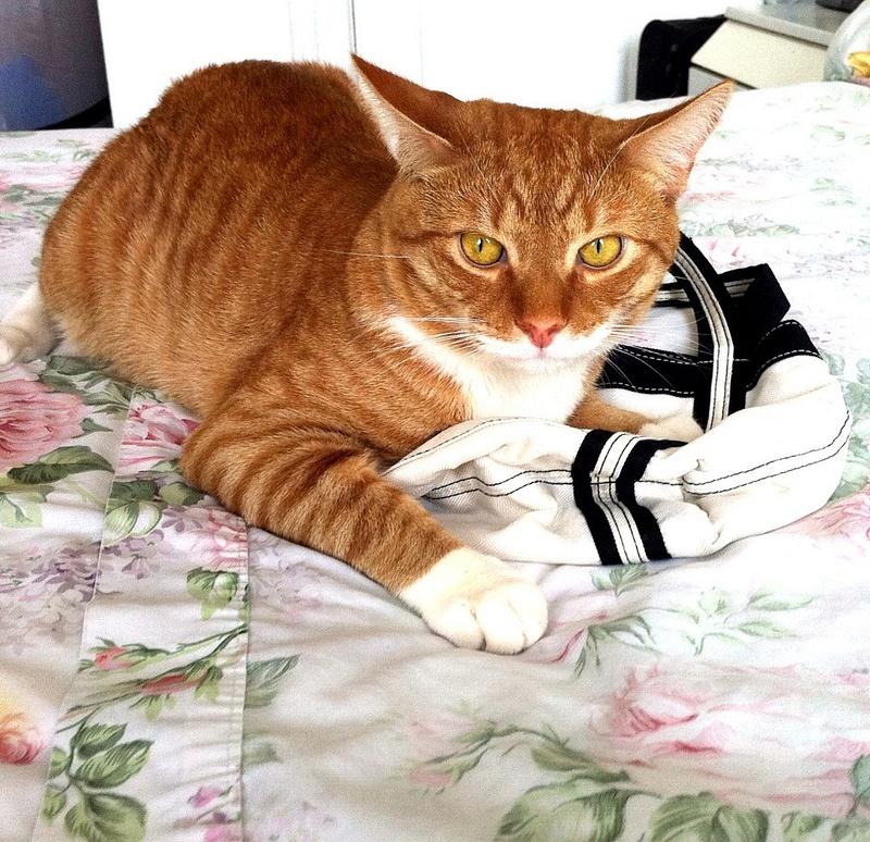 My Cat Love His Bag