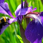 NewZealand 2010 Flora