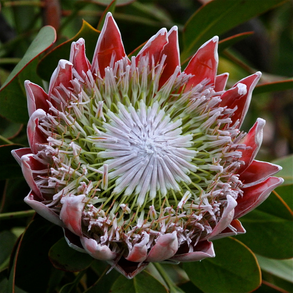 New Zealand Flora 2012 by JamesMetzger by JamesMetzger