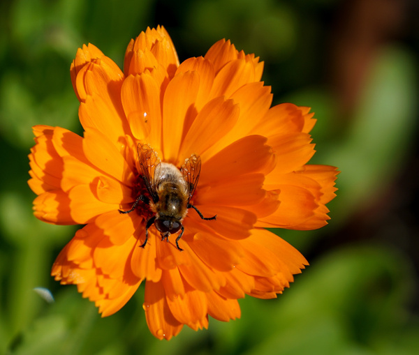 Bees by JamesMetzger