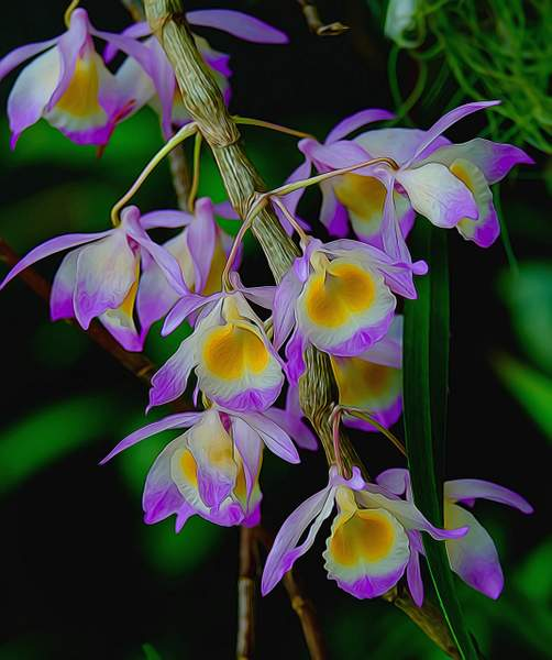 Orchids Glow