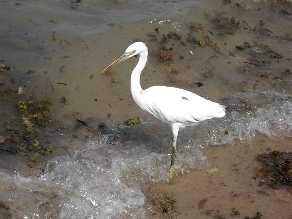 Hurgada 2007 by Ambienta