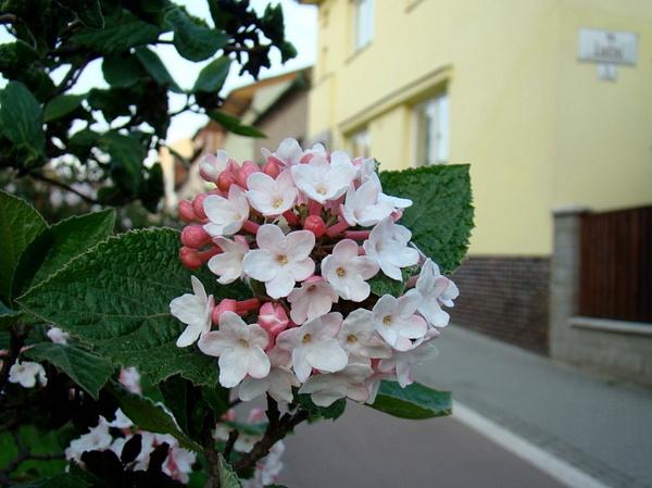 Brno, April 2010 by Ambienta