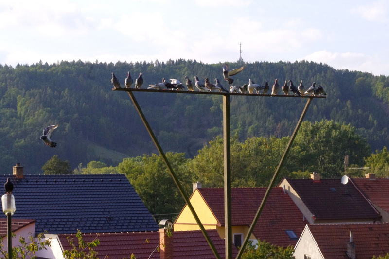 Boskovice, 2012