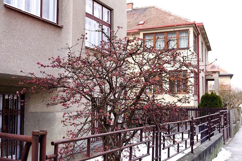Brno, March 2013