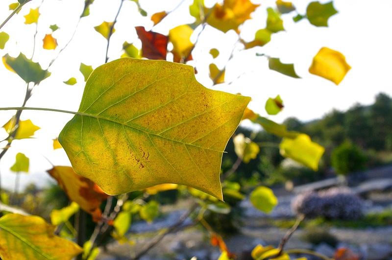 Aboretum, Autumn 2014