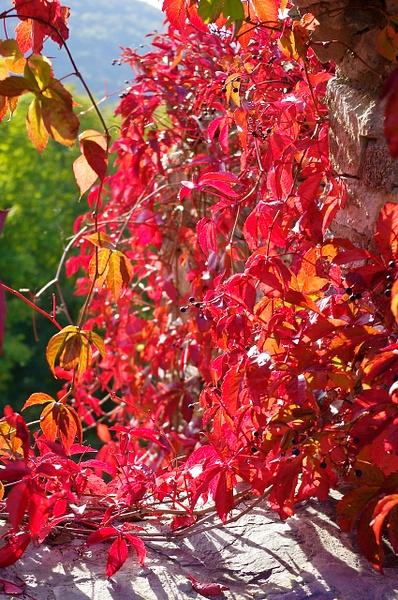 Sovinec, Autumn 2014 by Ambienta