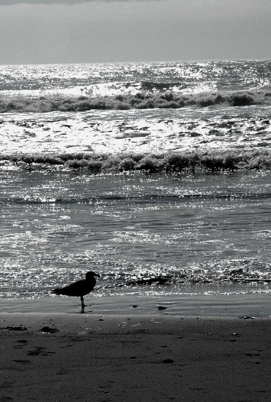Seagul_on_Beach_altered