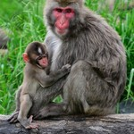Zoo Visit 14Jun2013