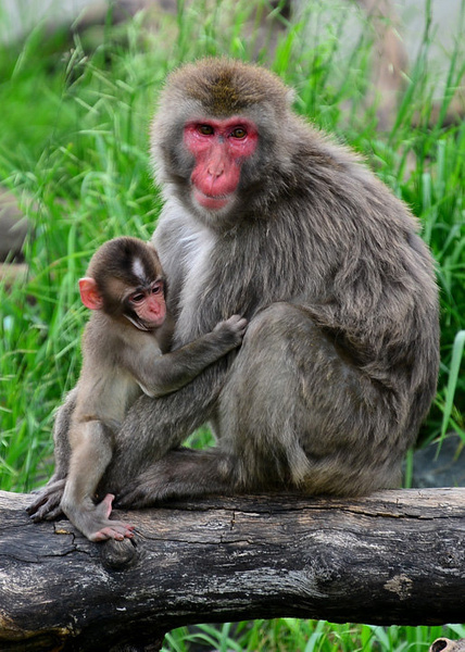 Zoo Visit 14Jun2013 by User3240235