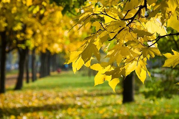 2012-10_0544 by SvetaShevchenko