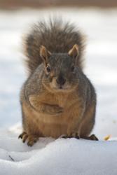 2007 Denver Squirrels
