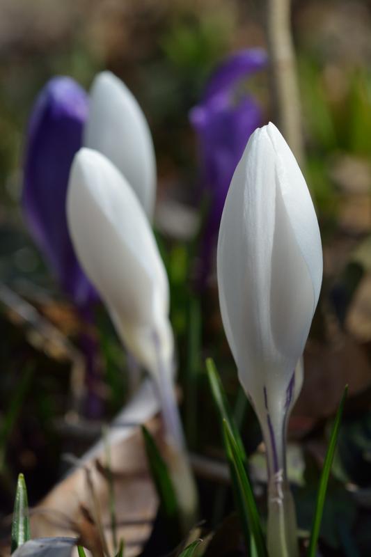 White and purple