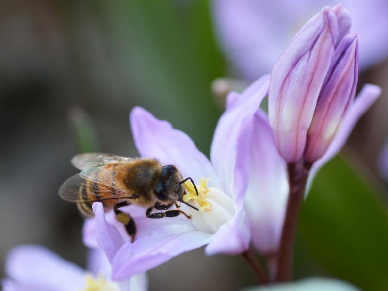 Three flowers, one bee