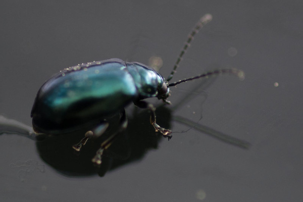 Spotted this beetle on the back window of the car by...