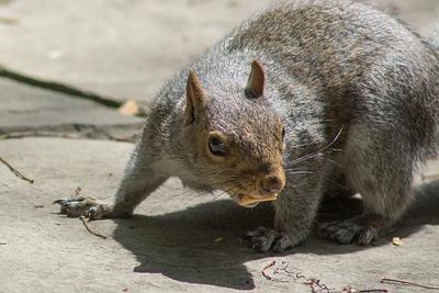 2013 Squirrel Action