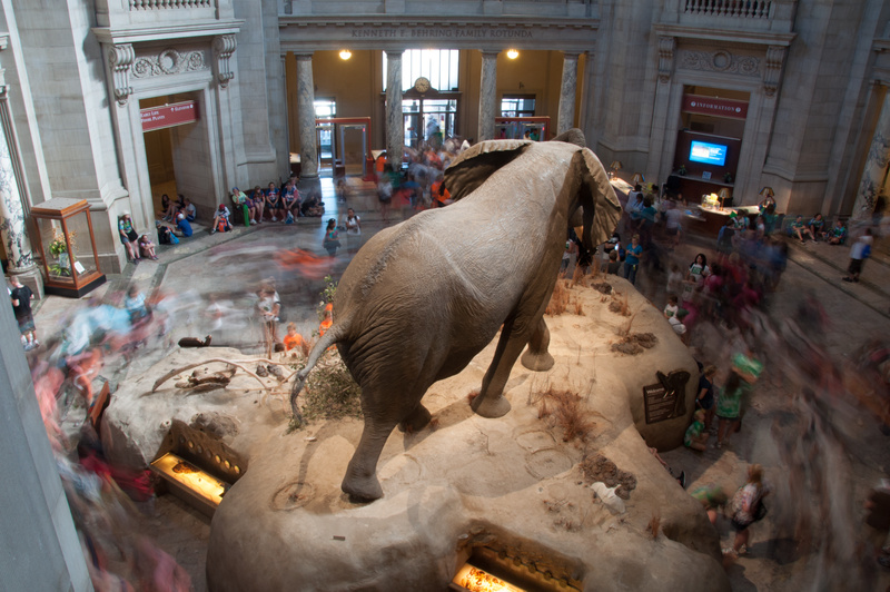 The entry hall in the Smithsonian Museum of Natural History