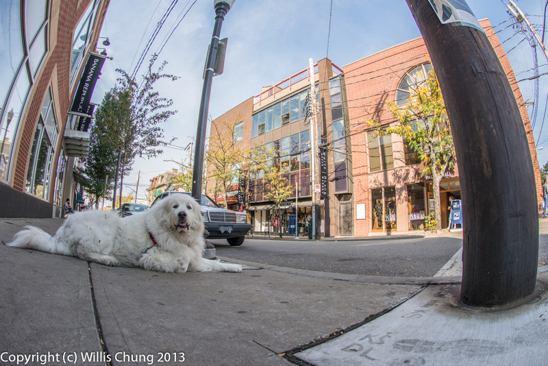 A dog's eye view of Walnut Street, Pittsburgh