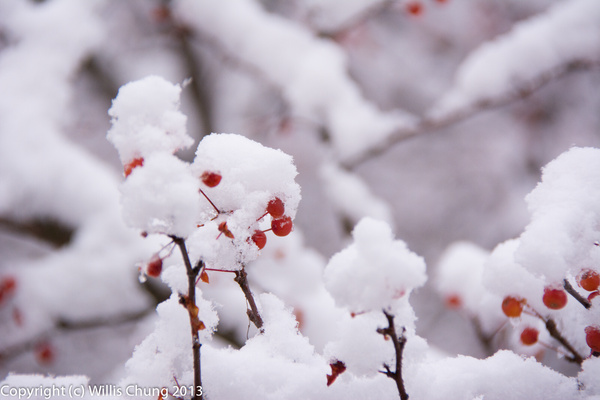 2013Nov First snowfall in Pittsburgh by Willis Chung by...