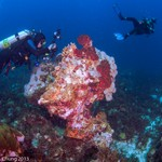 2014Mar Bonaire east coast dive - Boca Onima